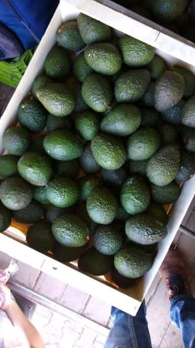 Se Vende Aguacate Hass