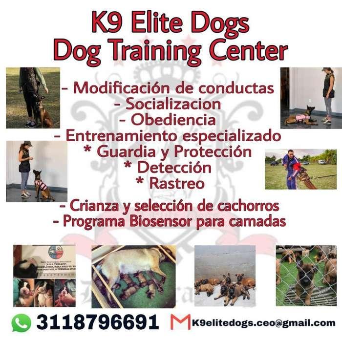 Adiestramiento Canino Personalizado
