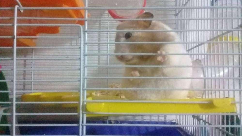 pareja de hamsters con jaula