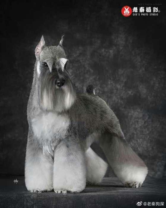 Peluqueria Canina Todos Los Cortes