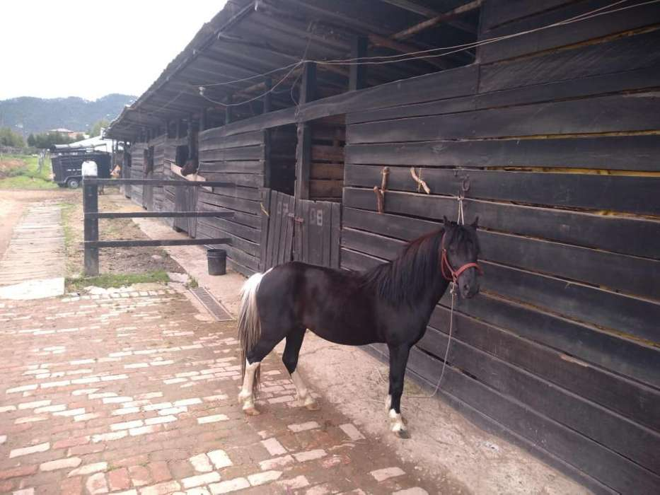 Vendo Hermoso Pony
