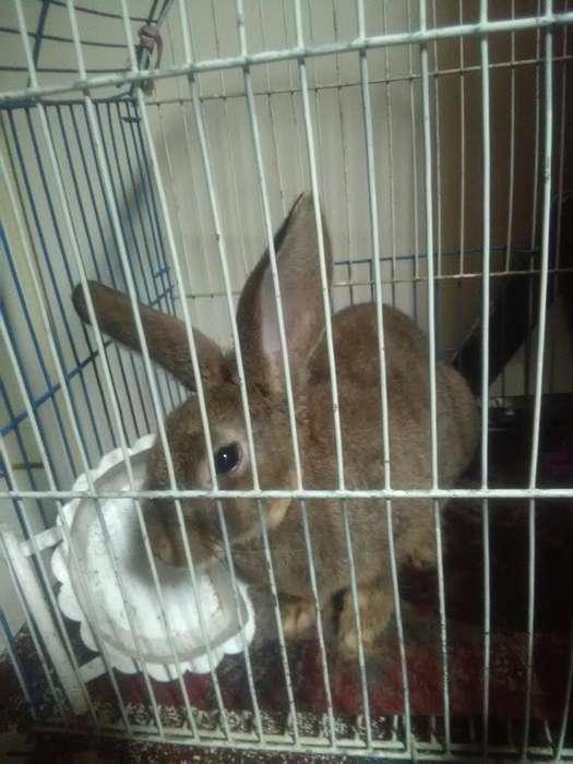 Vendo Conejo por No Tener Donde Tenerlo