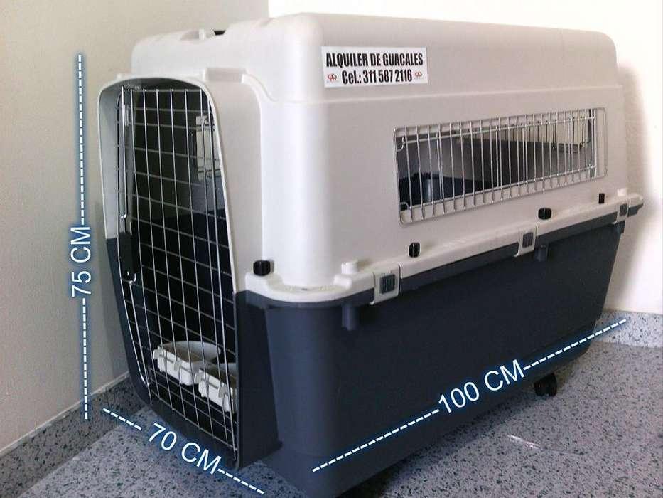 guacales , kennels bebederos y comederos para mascotas trasporte