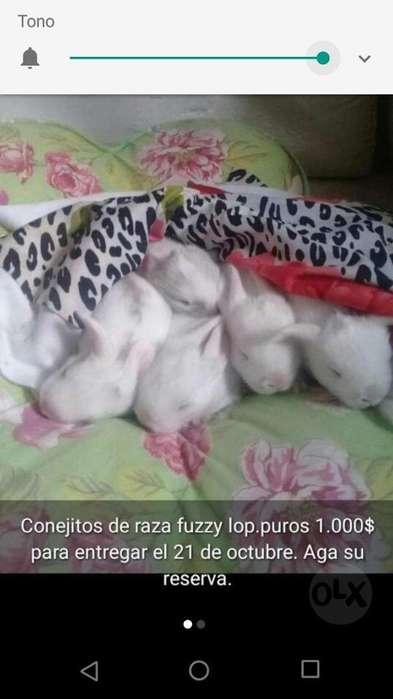 Conejitos de Raza