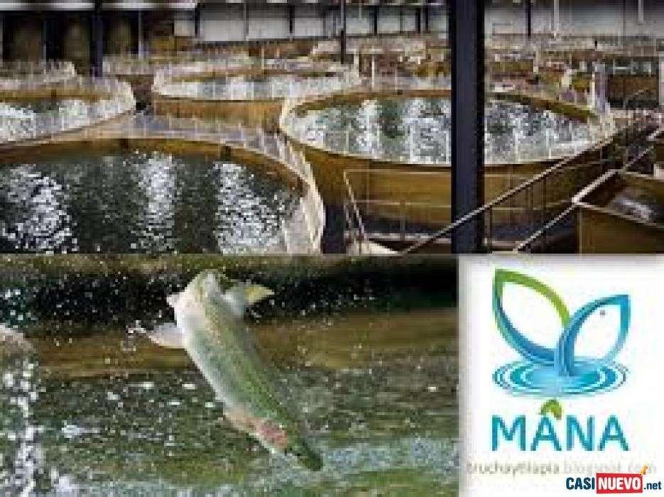 Sistemas orgánicos para la crianza de mojarra