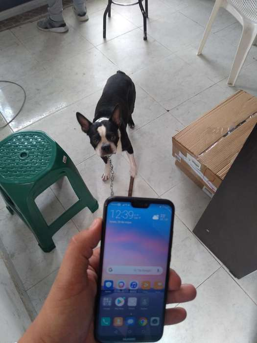 Huawei P20 Lite 4g Estado 10 Envio