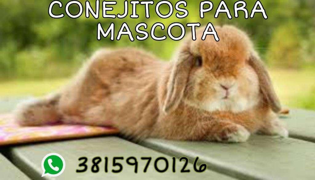 Conejitos para Mascota Orejas Caidas