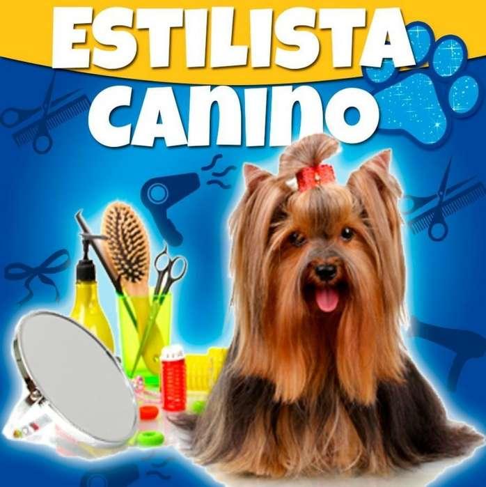 Peluqueria Canina en Casa