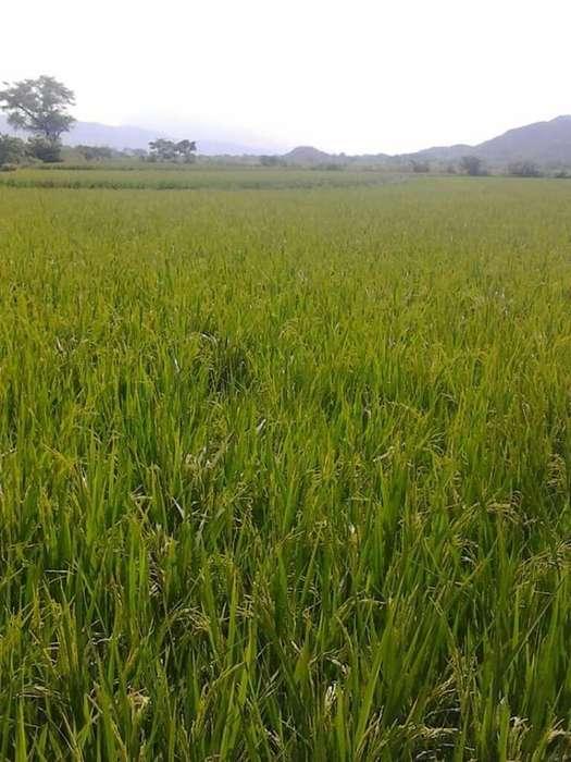 Venta Terreno Agrícola