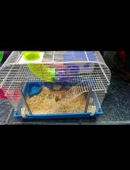 Pack Hamster Completó