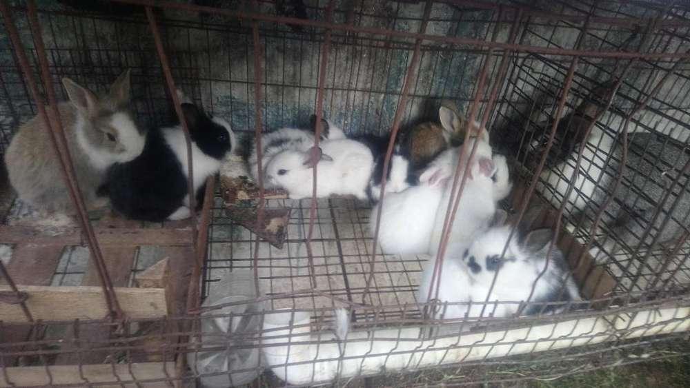Vendo Hermosos Conejos para Mascotas