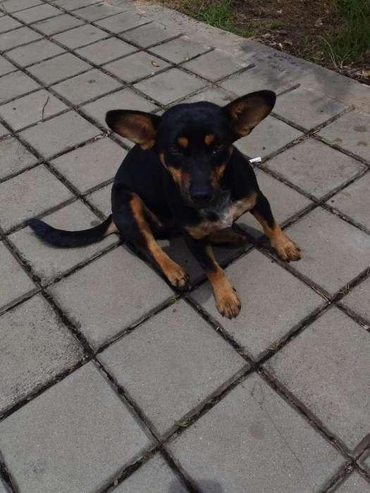 Hermosa <strong>perra</strong> Pequeñita Adopcion