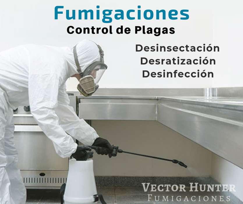 Fumigacion ( Lanus )