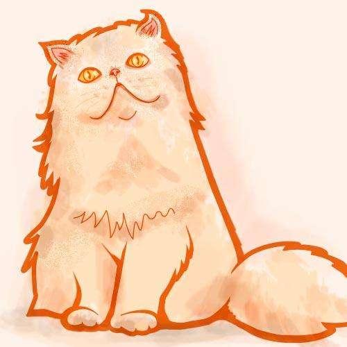 Adopto gata persa