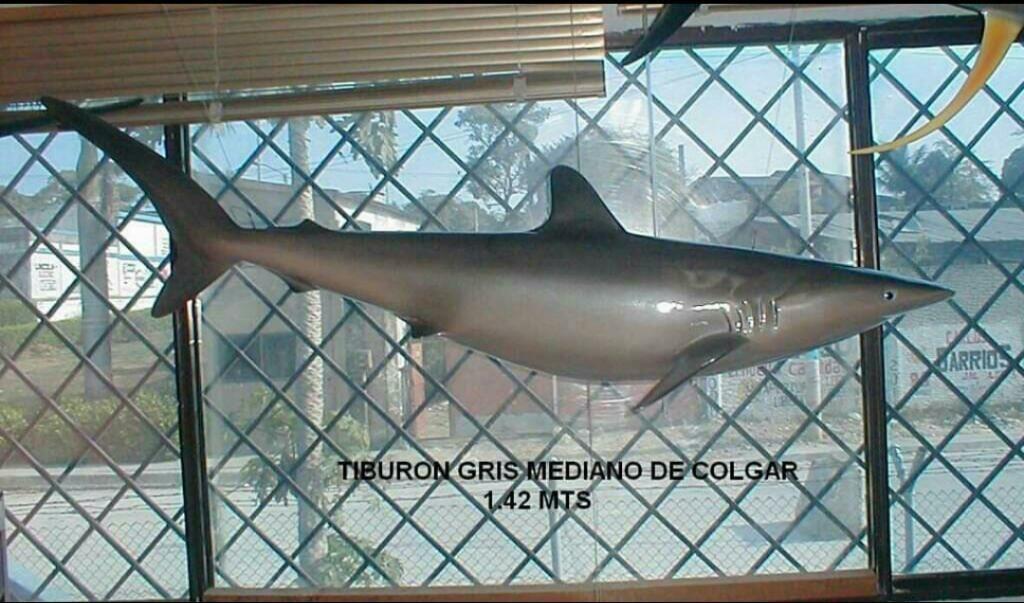 Tiburón Gris Sala 1.42 Mt de Colgar