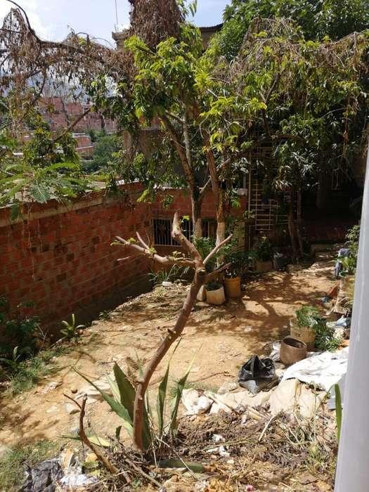 Lote 8*8 Villareal Dangon Bucaramanga