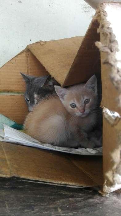 para Adoptar Gatitos