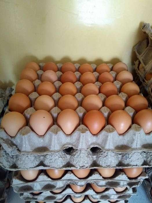 Vendo Huevos Al por Mayor