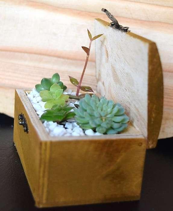 Baúl con plantas suculentas