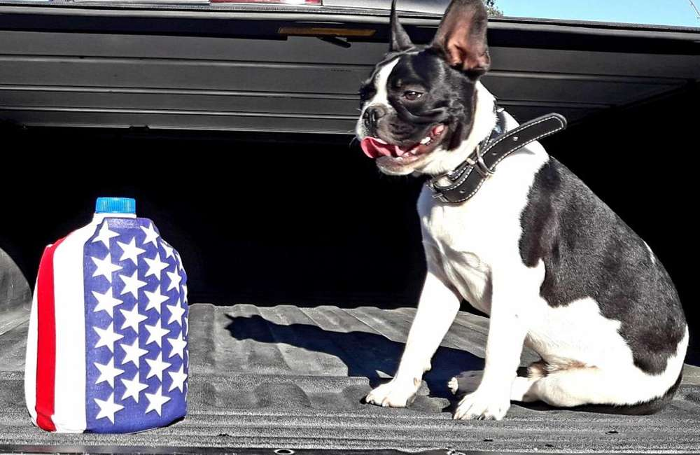 Bulldog frances puro macho 20 mil