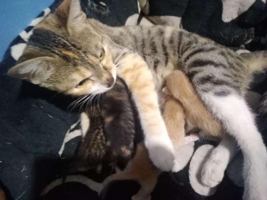Se Da en Adopción Gatitos