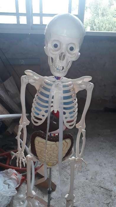 Vendo Esqueleto