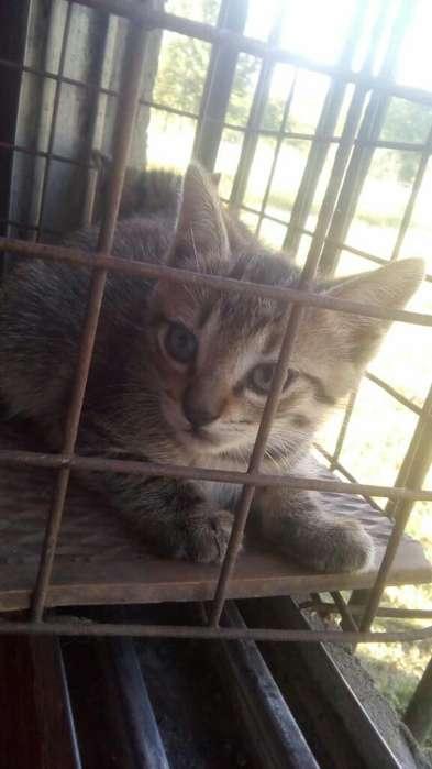 Gatito Macho en Adopción