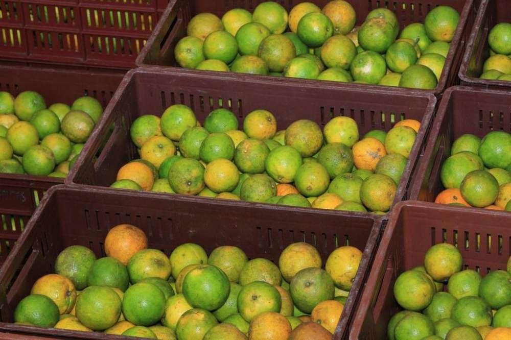 Cascaras de naranja