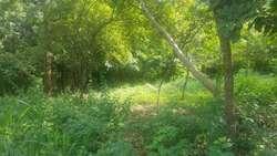 Lote de terreno de en el sector de palomino - wasi_560115