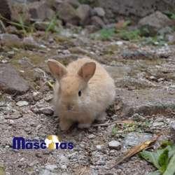 Conejos ,hamster,cobayos Y Curis