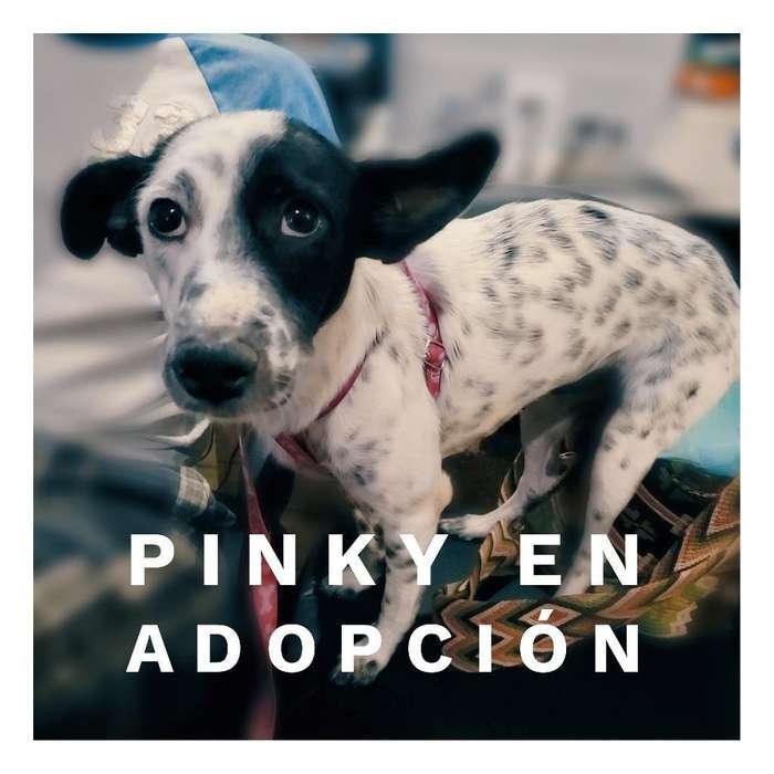 Pinky en Adopción