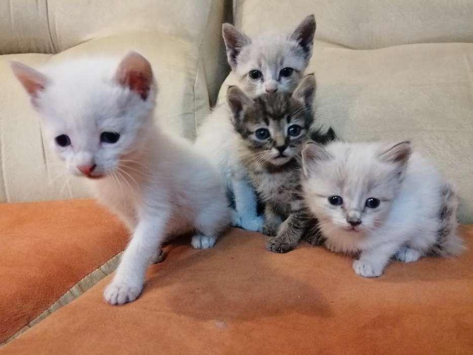 Cambiamos Gaticos por Kilo de Comida