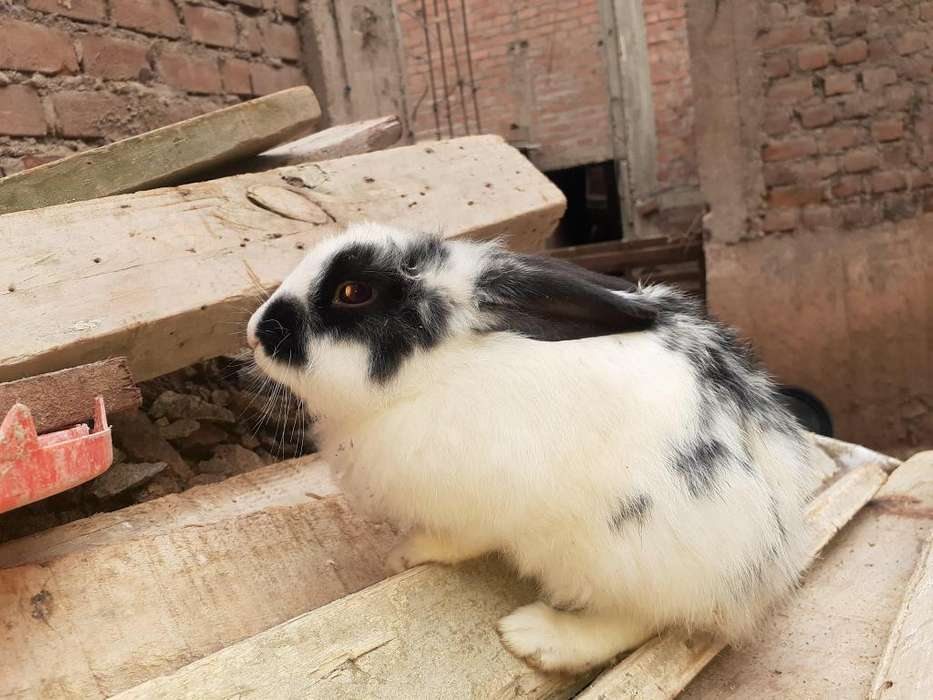 Venta de conejos criado en casa