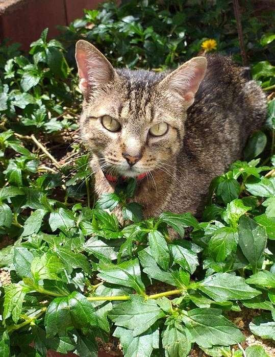 gatica busca familia que la adopte
