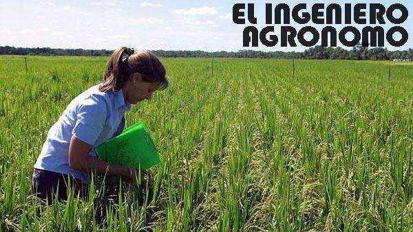 INGENIERO(A) AGRONOMO