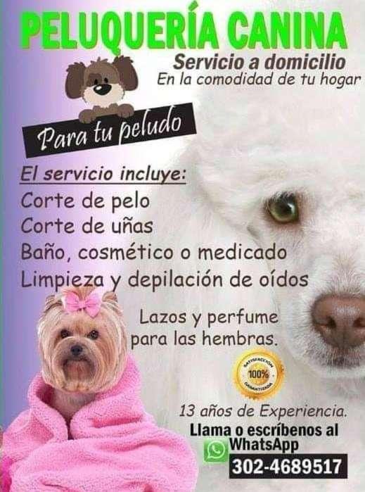 Peluquera canina a domicilio en Cartagena