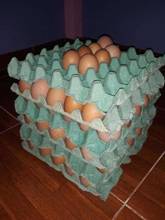 Huevos sin Hormonas