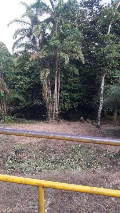LOTE EN ZONA RURAL DE CORDOBA BUENAVENTURA (M.C.) cod 1619035