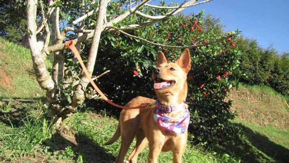 Frambuesa <strong>perra</strong> en Adopción