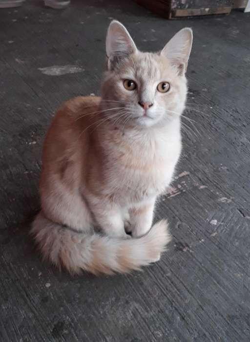 Regalo 2 Gatos Machos Ambos