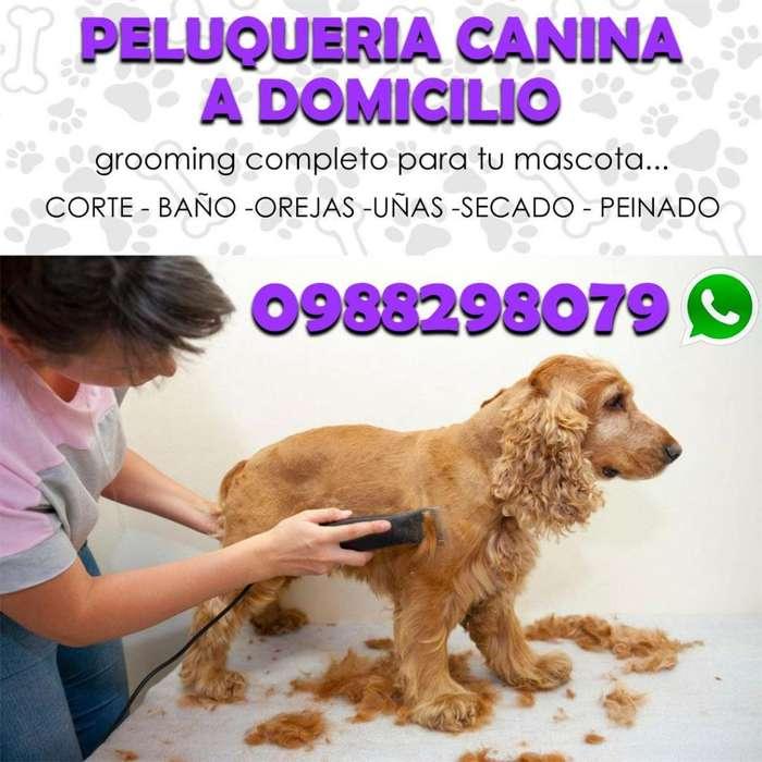 <strong>peluqueria</strong> canina a domicilio peluquero canino estilista canino