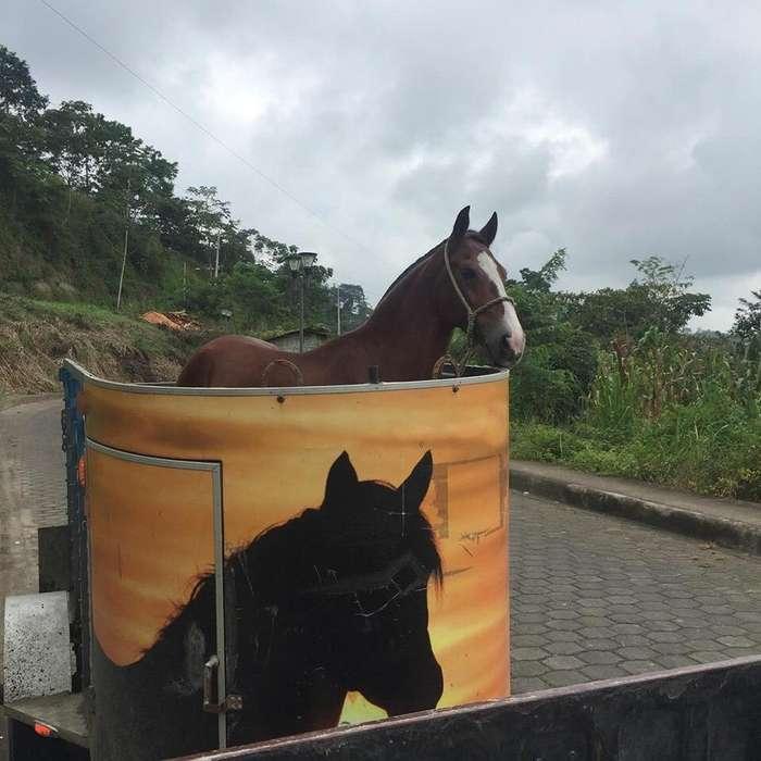Lindo Carreton para Dos <strong>caballo</strong>s