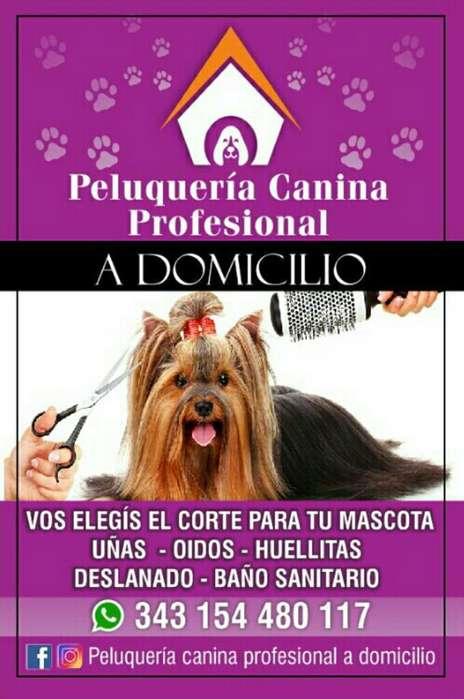 Peluquería Canina en Tu Domicilio