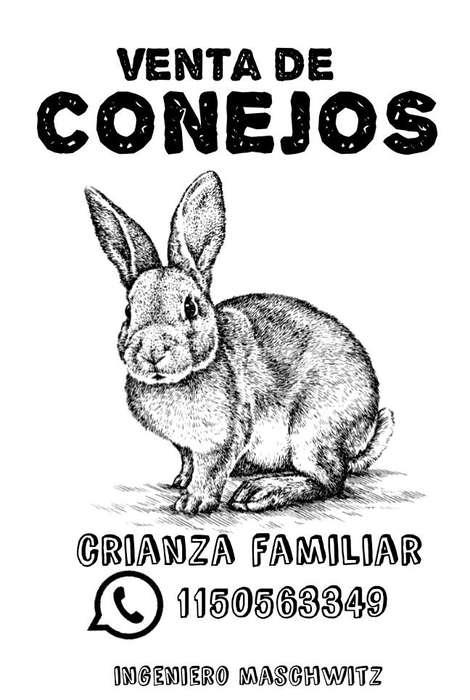 Venta de Conejos Crianza Familiar