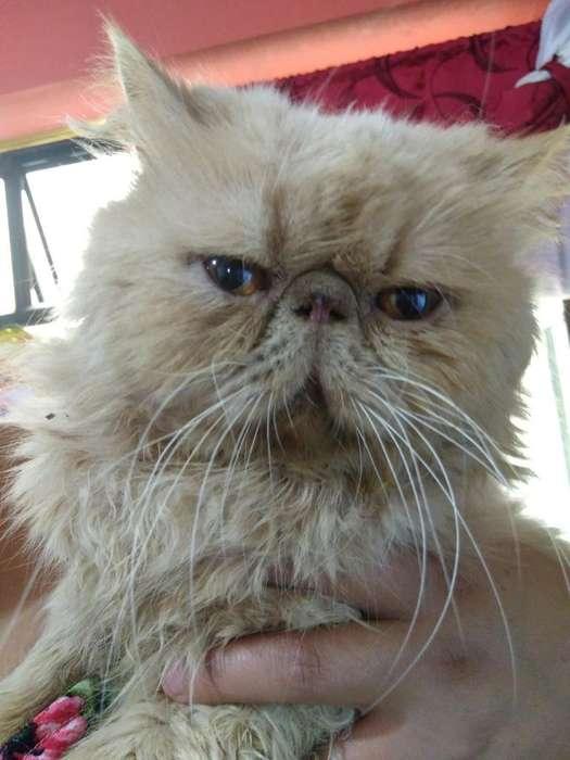 Gato para Monta