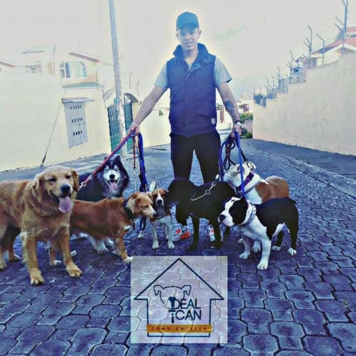 Ideal Can Paseos Y Adiestramiento Canino