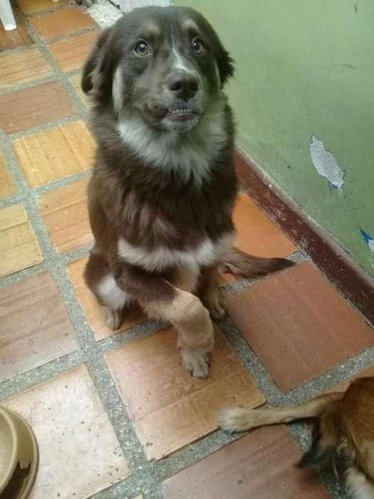 Adopcion <strong>perra</strong> de Un Año Y Siete Meses