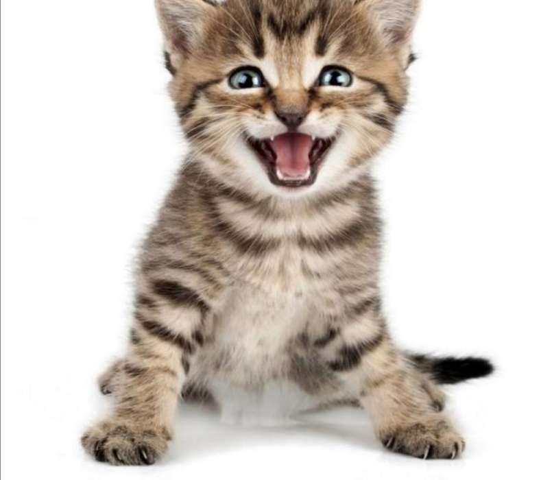 Busco Gato para Adoptar