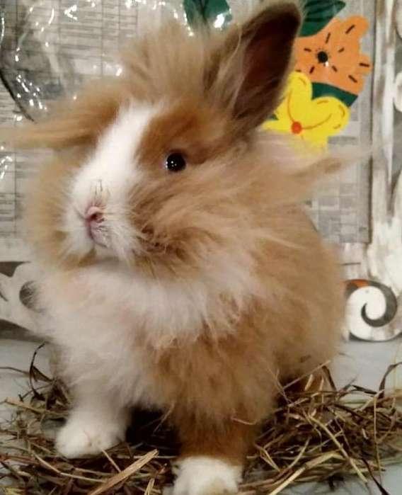 Conejos Cabeza de León Bogotá 3224499925
