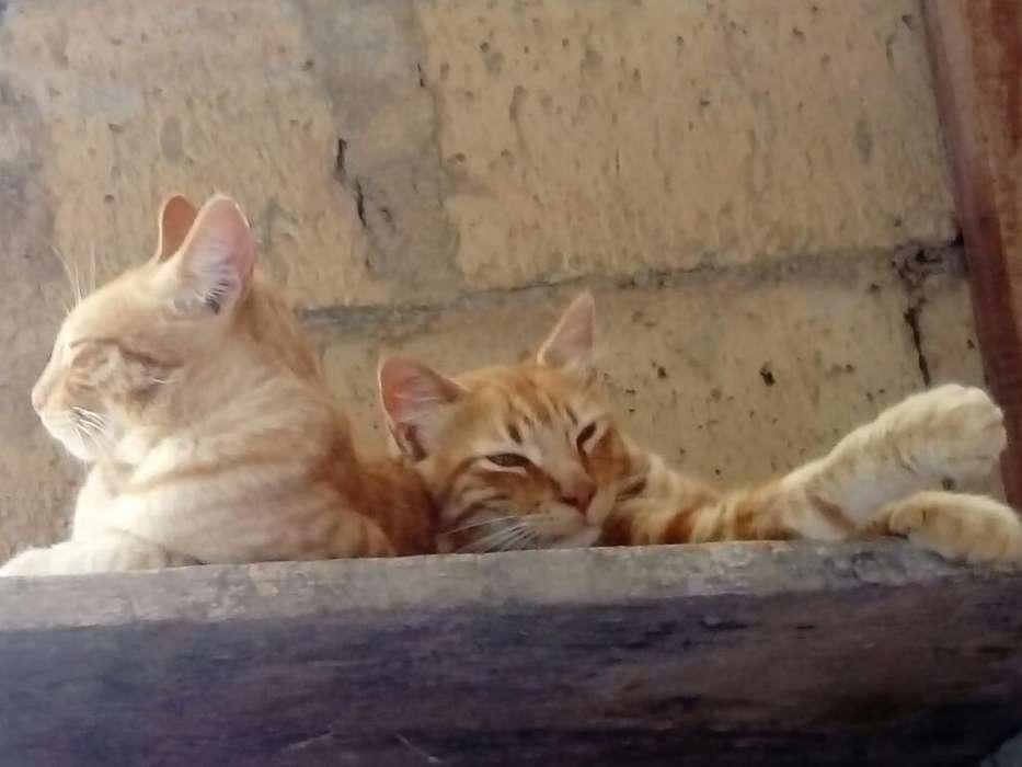 Regalo Gatos por Falta de Espacio Estan